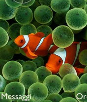 CLOWN FISH Theme