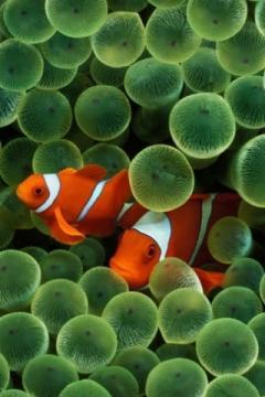 Iphonefish