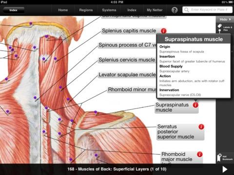 Netter human anatomy