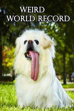 Amazing World Record