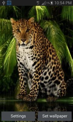 Angry Forest Leopard LWP