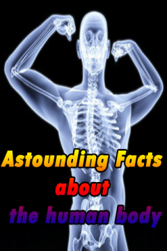 Astounding Facts about the human body