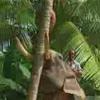 Elephant knocking of the tree(3GP)