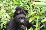 Endangerd Species Info