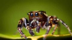 Free HD Spider Insect Animal Wallpaper for android