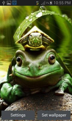 Green Frog Live Wallpaper