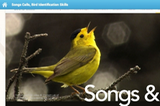 Learn Bird Songs