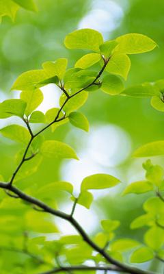 скачать бесплатно Nice Green Branch Hd Wallpaper для Samsung