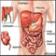 Body Organs Facts
