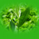 Bitkiler Bilgi Yarismasi