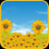 Sunflower Field Live Wallpaper