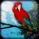 Parrot Live Wallpaper