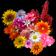 Ultimate Flower Quiz