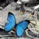 Jewelry Butterflies LWP