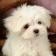 Fine Puppy Live WP