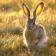 Smiling Rabbit HD LWP