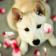 Dog Pet HD Live WP