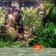 Aquarium 3D Pro Live Wallpaper