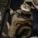 Fatty fat cat Live Wallpaper