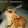 My Impreshun Live Wallpaper