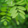 Small Green Branch Wallpaper