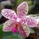 Orchids Garden Live Wallpaper