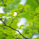 Nice Green Branch HD Wallpaper