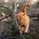 Branch with nice cat HD Wallpaper