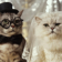 Lolcat Compilation Live WPs