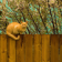 Big Fence Live Wallpaper