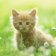 Kitty Pet HD LWP