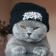 Lolz cats Live Wallpaper