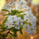 Branch with spring flowers HD LWP