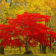 Autumn Trees Live Wallpapers