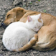 Dog and Cat Nap Live WP