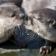 Otter Communication Live WP