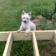 Inspecting dog Live Wallpaper