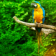 Branch with parrots Live Wallpaper