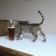 Beer Bong Cat Live Wallpaper