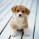 Adorable Puppy Live Wallpaper