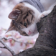 Branch with cat pet Wallpaper