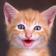 Funny Cats Live Wallpaper