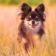 Puppy Pet HD Wallpaper