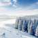 Trees in the snow Wallpaper