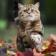 Humiliate cats Live Wallpaper