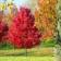 Autumn Trees Live WP
