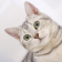 American ShortHair Kitty LWP