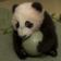 Panda drop off Live Wallpaper