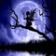 Moonlight Cute love Fairy Live Wallpaper