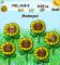 Sunflowers *NEW CUSTOM ZEN*